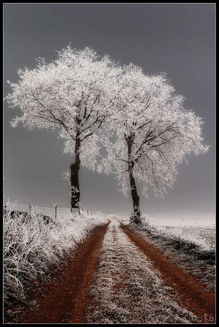 Winter Frost, France - ©Richard Giulielli - www.flickr.com/photos/27197968@N04/5247071172/