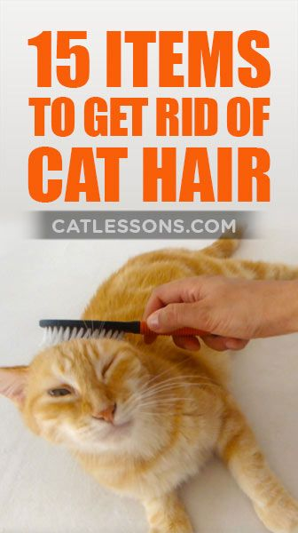 15 simple ideas to remove cat hair around the house