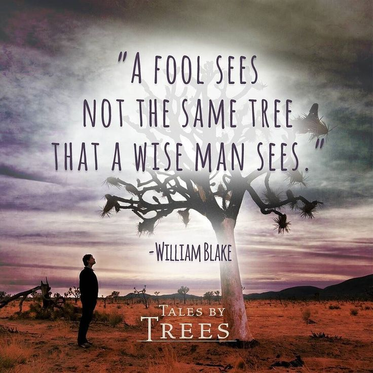 #wisdom #inspiration #quote #talesbytrees