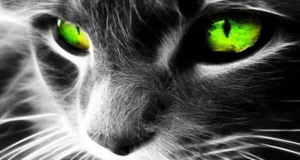 Un articol de Calin Petru Barbulescu     Pisica- animalul magic!     Aura acestui animal este atat de puternica incat poate proteja intreag...