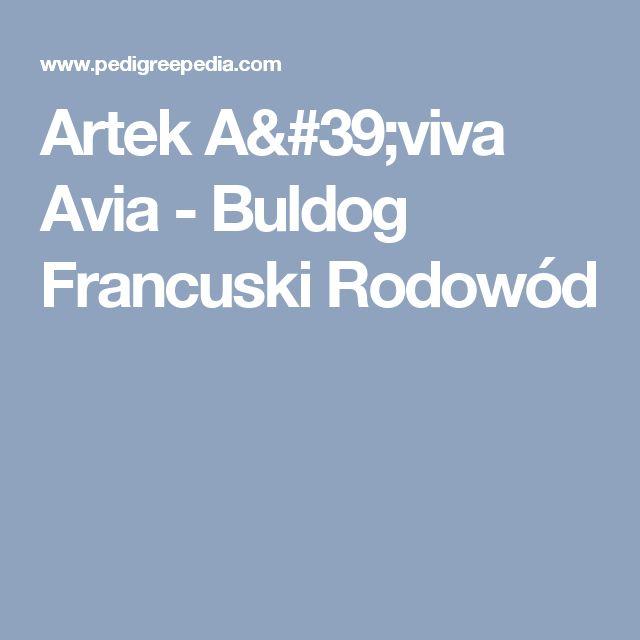Artek A'viva Avia - Buldog Francuski Rodowód