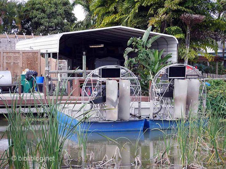 La Floride : Les Everglades