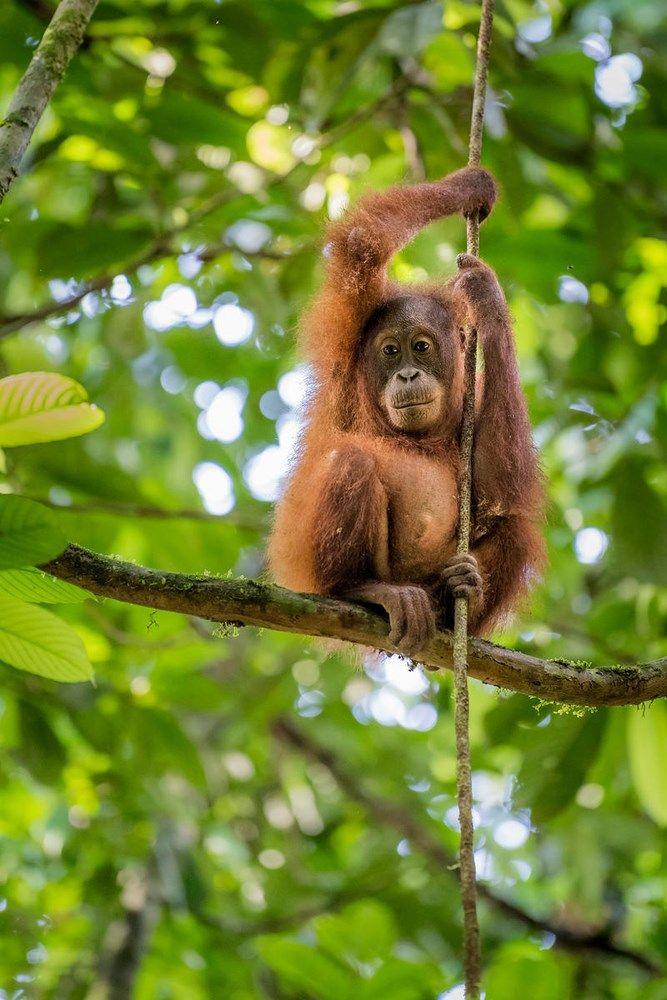 Verbazingwekkend In en rondom Indonesië vind je prachtig tropisch regenwoud met PD-72