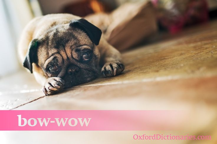 How many of these synonyms do you use for man's best friend? #dog #language #synonym