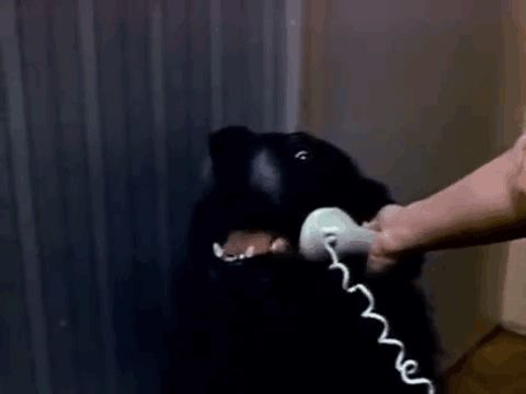 Whenever you hear about a dog calling 911, it's usually because their owner is having some kind of emergency. But what would happen if a dog called 911 with it's OWN idea of a crisis?