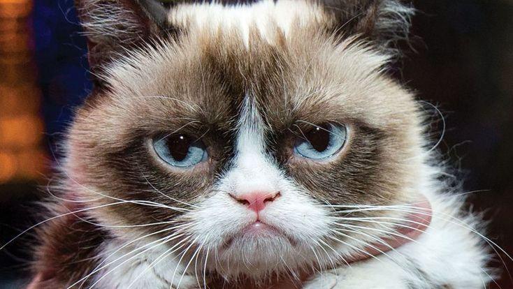#GrumpyCat To Be First #AnimatronicCat Figure in #MadameTussaud's; Still Unimpressed