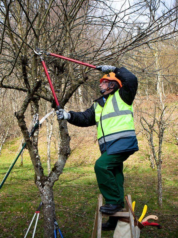 12 Things An Arborist Wishes You Knew Arborist Tree Care Tree Pruning