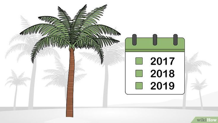 How to Trim a Palm Tree: 13 Steps (with Pictures) - wikiHow