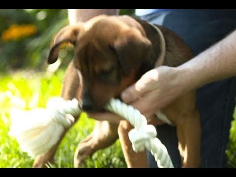 How To Stop Puppy Biting: Training Puppies Not to Bite - YouTubehttps://www.youtube.com/watch?v=1dKiaKSEilg