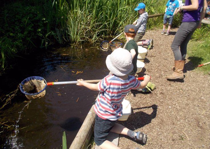 Pond dipping at College Lake. Catherine (BBOWT) Photo from Haddenham St Marys School.