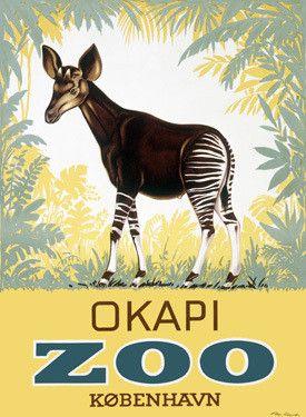Okapi Copenhagen Zoo Fine Art Print