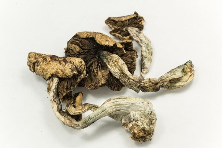 Study: Psilocybin Mushrooms Stimulate Growth Of New Brain Cells | The Galactic Free Press