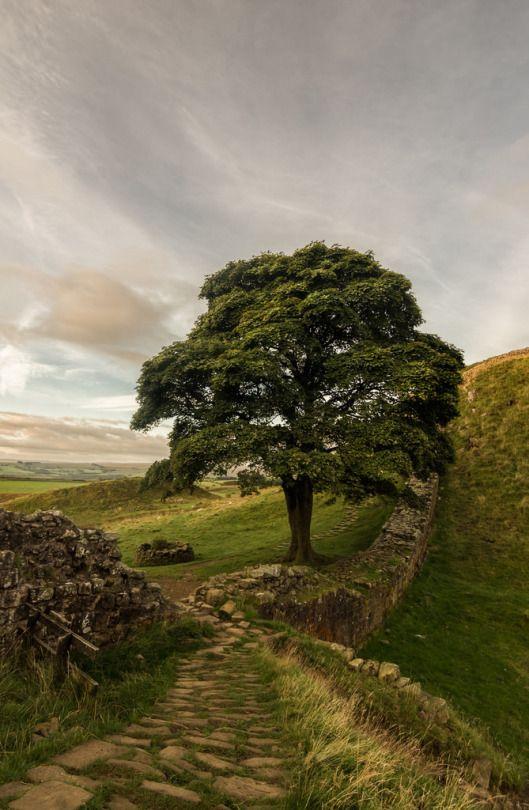 Sycamore Gap at Hadrian's Wall - Northumberland, England by grbush