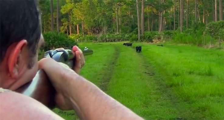 Ever wondered what it would be like to go hog hunting with elephant guns? Well, these two guys in Florida did.