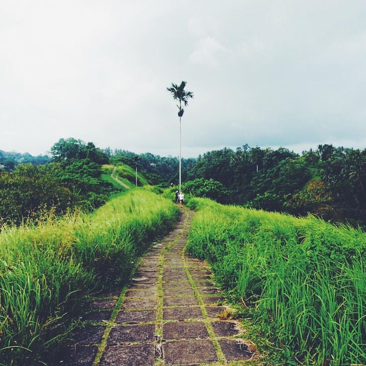 "Campuahn Ridge Walk in Ubud, Bali (Indonesia) - 102 Likes, 8 Comments - Sarah   Ranga Adventures  (@rangaadventures) on Instagram: ""Beautiful Bali ❤ Campuhan Ridge Walk, Ubud, Bali . . . . . #girlsloveadventure #travelgram…"""