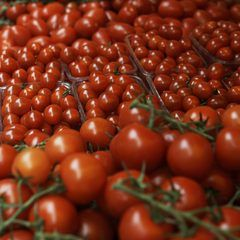 La agricultura hidropónica tiene el potencial de aumentar el tamaño de los…