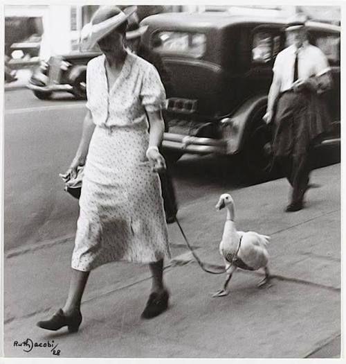 Ruth Jacobi - New York, 1928. Así era mi madre, cuando salía a la calle, la seguían una oca y un gato, pero sin correas.