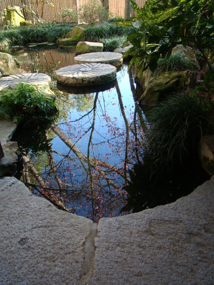 50 best beautiful koi ponds images on pinterest water for Beautiful koi ponds