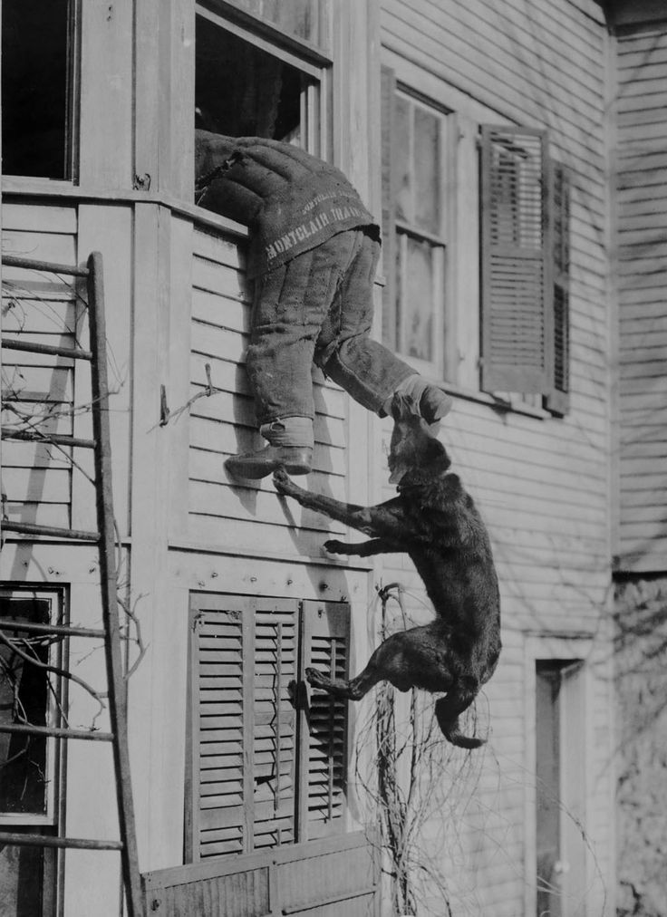 """This picture is almost 100 years old. Doesn't look all that different, does it? (""""police dog training • usa 1919"""")"""