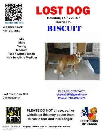 84 best LOST \/ STOLEN PET S images on Pinterest Organizations - lost dog flyer examples