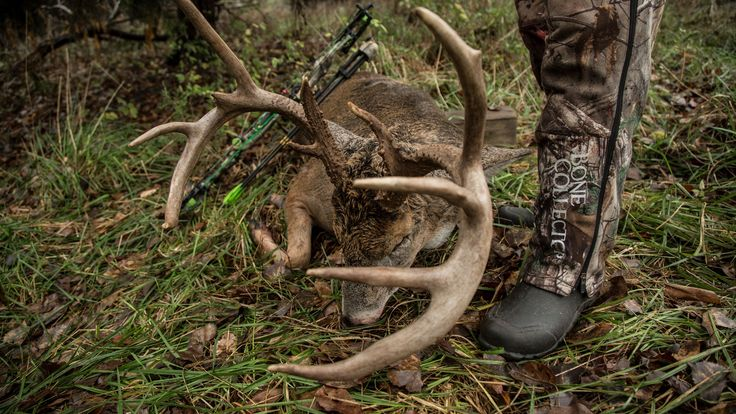 The late season is an all too often overlooked opportunity by whitetail deer hunters, when in fact it is one of the best times to harvest big mature buck. Take note of these tips that you need to know to be successful during the late season.