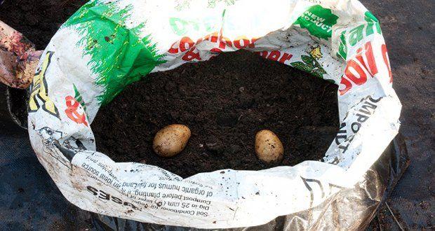 vous-naurez-plus-besoin-dacheter-de-pommes-de-terre-grace-a-cette-astuce