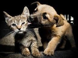 quien dice que los gatos y los perros no se llevan bien.