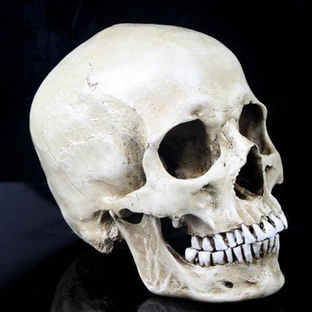P-Llama Resina Cráneo Humano Replica Modelo Médico de Tamaño Natural 1:1 Cráneo…