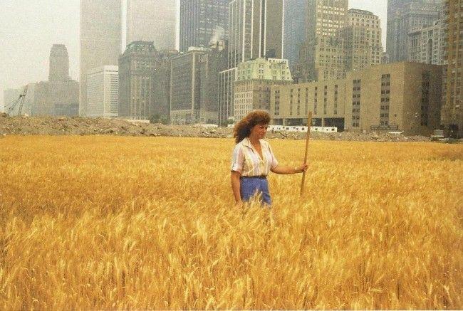 AgnesDenes-wheatfield-more than green