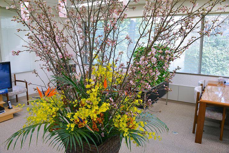 Cherry blossoms, Strelitia, Onshihumu, Alstromeria, Areca palm 啓翁桜、ストレリチア、オンシジューム、アルストロメリア、アレカヤシ