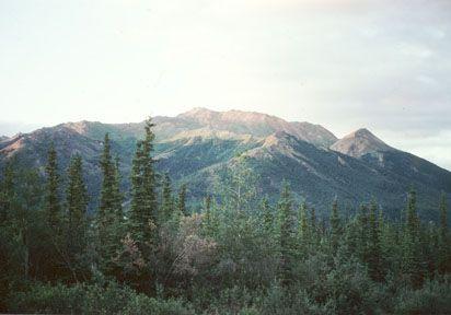 Bioma Taiga, America del norte, Alaska. Aqui, hubo derrames de petroleo y cambios de temperatura