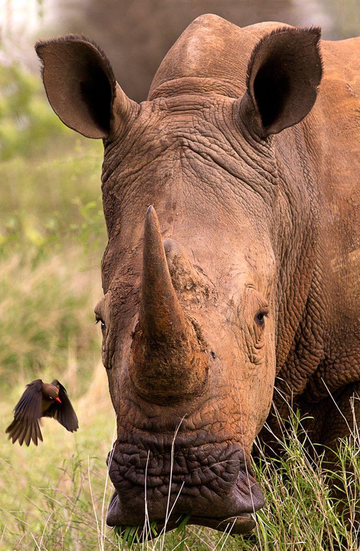 Rhino & Friend