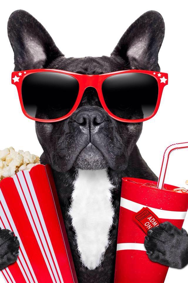 cachorro | Projetos para experimentar em 2019 | Quadros ...