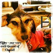 Gilby - our very own Queen of Chaos