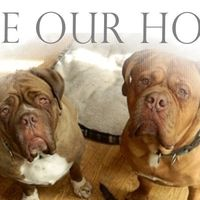 Municpality/Municipalité de La Pêche rbussiere@villelapeche.qc.ca: Renew the Sanctuary Licence for Valley Mastiff Rescue Renouvelé le permis annuel du refuge / Valley Mastiff Rescue