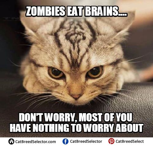 151edbf3f725bd694afcfa95ab76d8f6 17 beste idee�n over angry meme op pinterest dan en phil en,Angry Meme