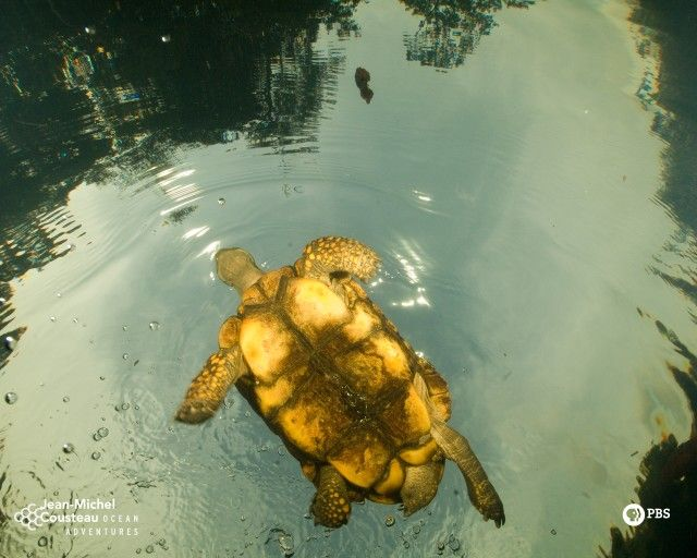 Turtle Source ⇨ http://www-tc.pbs.org/kqed/oceanadventures/funandgames/images/turtleamazon-1280.jpg