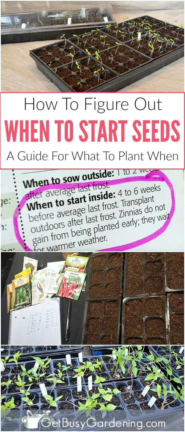 Timing is very important when it comes to starting seeds indoors under lights. But figuring out when to start seeds indoors is difficult, especially when you're new to seed starting. I've got you covered. Learn exactly how to figure out when to start planting seeds, and how to create your own personal seed planting schedule.