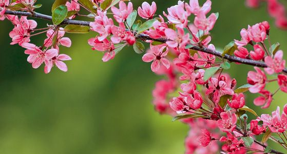 Get 10 Free flowering trees - join the Arbor Day Foundation