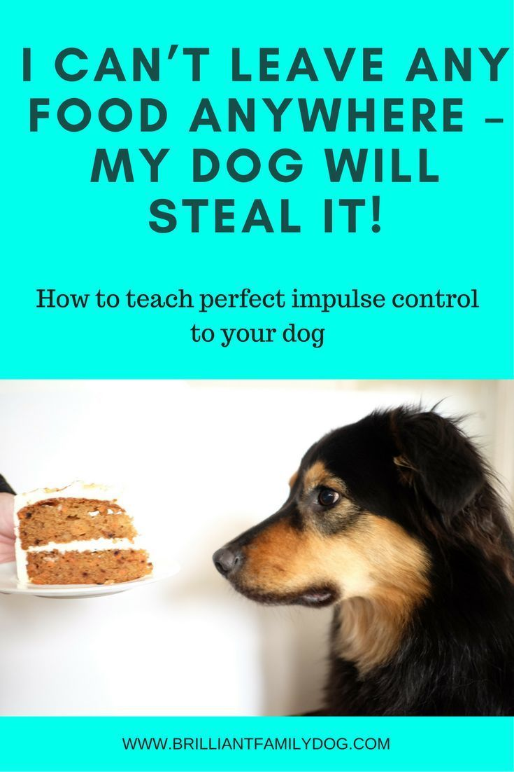 Communication on this topic: How to Find Low Cost Dog Training, how-to-find-low-cost-dog-training/