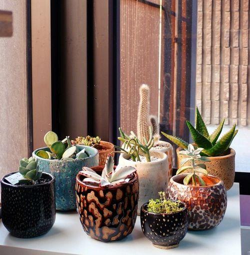 _Plants Can, Cactus Plants, Cacti Garden, Succulent Gardens, Succulent Plants, Cacti And Succulents, Flower Pots, Flowerpot