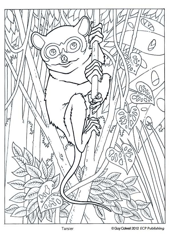 tarsier coloring pages animal coloring pagescoloring book