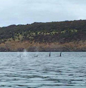 source: Kangaroo Island Ocean Safaris