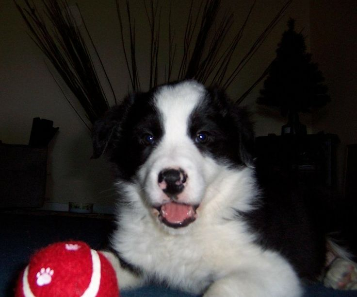 Monty Ready to Play http://www.foreverpetcare.com