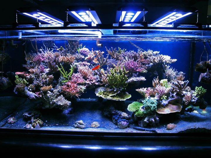 67 besten aquarium bilder auf pinterest korallenriffe for Salzwasser aquarium fische