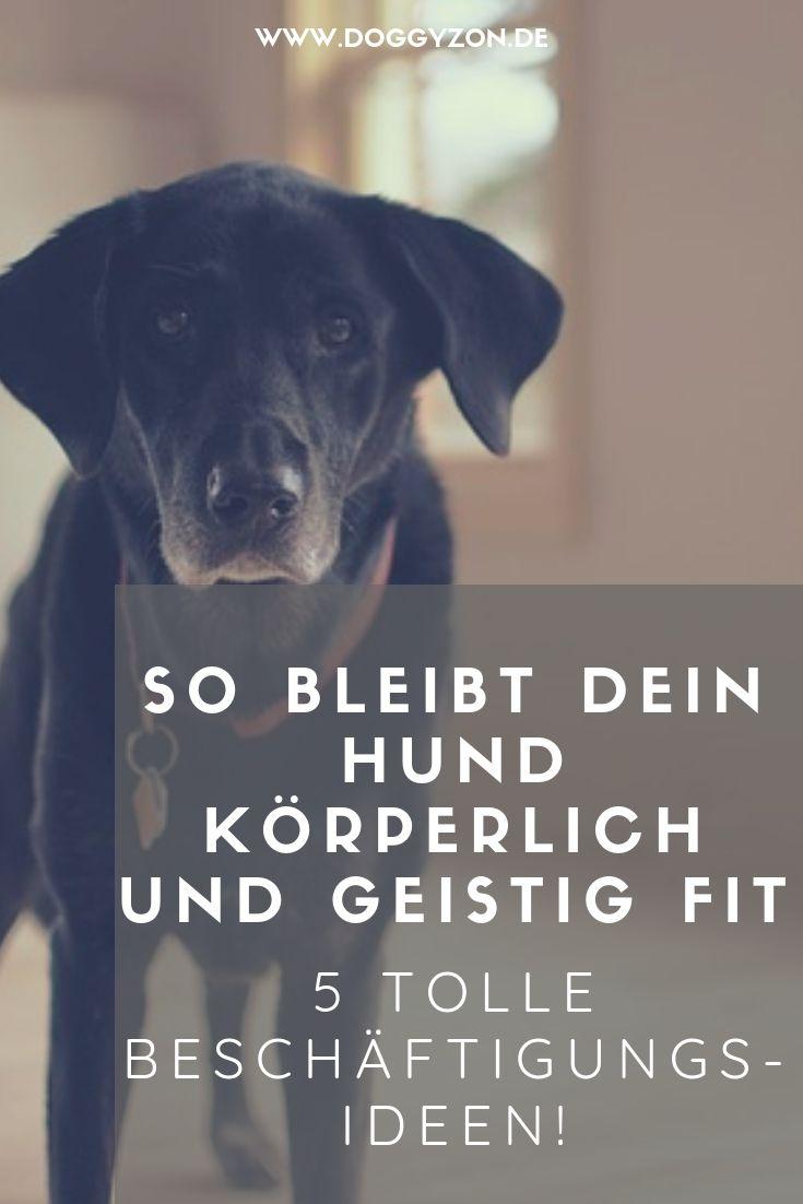 Beschaftigung Fur Altere Hunde 5 Tolle Ideen Doggyzon Alter Hund Hunde Hund Und Katze