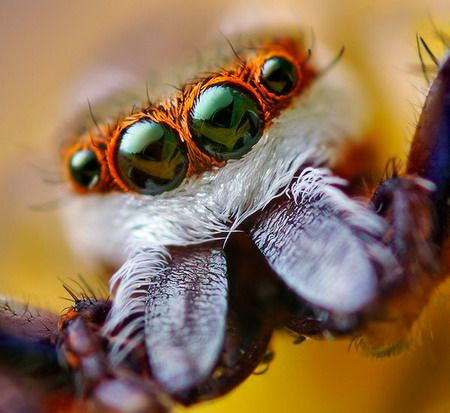 en comparación con los seres humanos los insectos ven con menos definición y sin tanta nitidez, sencillamente porque estos receptores no siempre llegan a ser suficientes como para alcanzar el nivel de la visión humana.