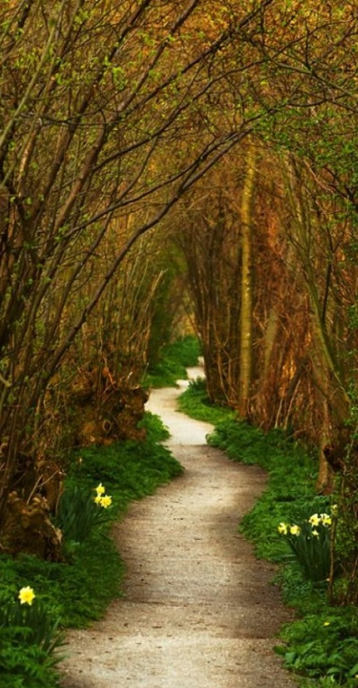 The winding path in south Holland • photo: Pepijn Sauer (Agnostic) on TrekEarth