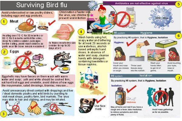 Bird Flu Avian Influenza Treatment