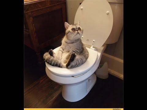 ОЧЕНЬ СМЕШНЫЕ КОТЫ!ПРИКОЛЫ С ЖИВОТНЫМИ!НОВИНКИ 2017!VERY FUNNY CATS! JOKES WITH ANIMALS! NEWS 2017! - #animals #animal #pet #cat #cats #cute #pets #animales #tagsforlikes #catlover #funnycats Learn how to speak cat! Click HERE for the cat bible! САМЫЕ ВЕСЁЛЫЕ ВИДЕО ПРИКОЛЫ,ПРИКОЛЫ С СОБАКАМИ,ПРИКОЛЫ С ЖИВОТНЫМИ,ПРИКОЛЫ О КОШКАХ,ПРИКОЛЫ О ПОПУГАЯХ.П